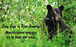 Text with Bear-Background-Stay-Safe-in-Bear-Country